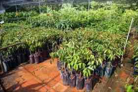 plant-nursery-mekong-delta