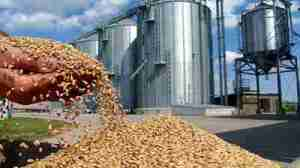 stock-footage-wheat-in-a-hand-after-good-harvest-slow-motion-in-a-background-agricultural-silo