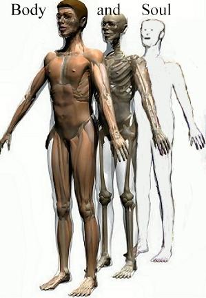 anatomium-p1-3d-anatomy