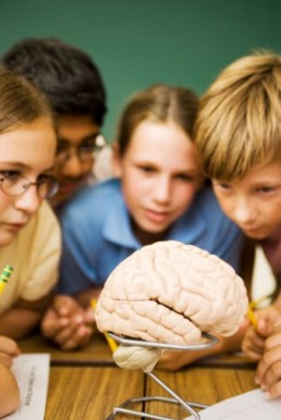 Students Intrigued by Brain in Science Class