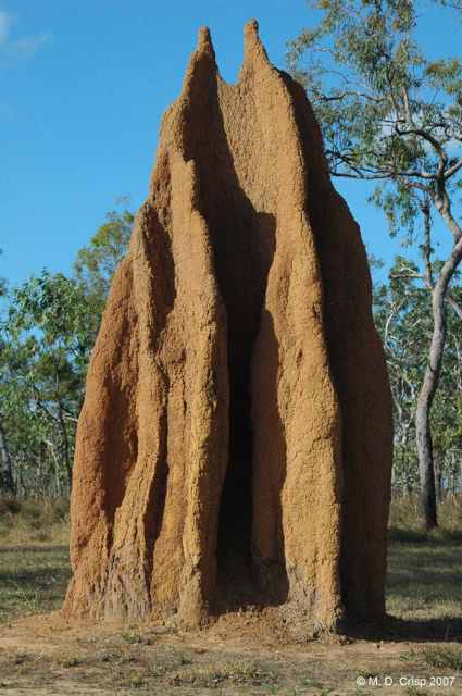 Cathedral termite mound, Bramwell Junction, Cape York Peninsula, Qld