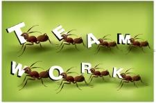 Ants (1)11