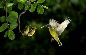Look-at-the-birds-of-the-air-they-do-not-sow-or-reap-or-store-away-in-barns-and-yet-your-heavenly-Father-feeds-them.1