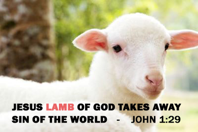 perfect-lamb-jesus type