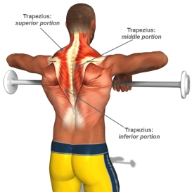 tension-neck-syndrome-trapezius-muscle-anatomy