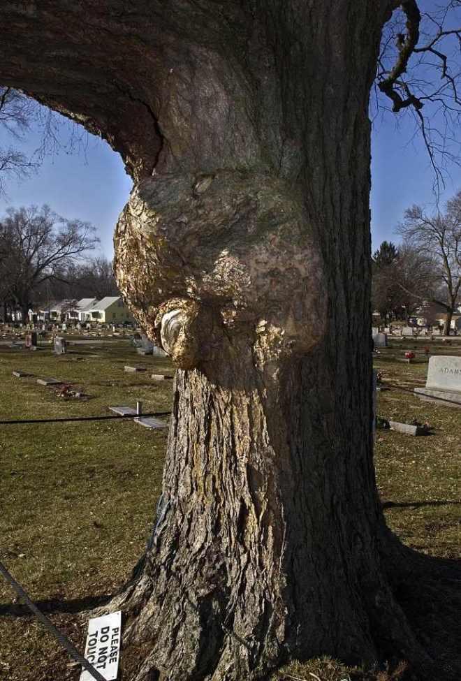 Jesus+Tree-1a-693x1024