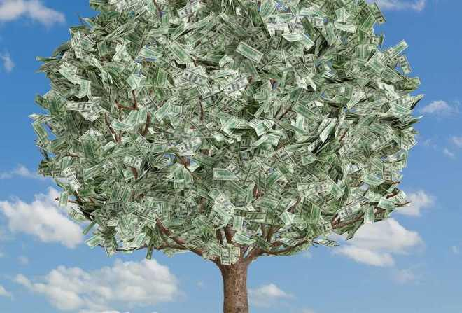 money_tree-996x675.jpg