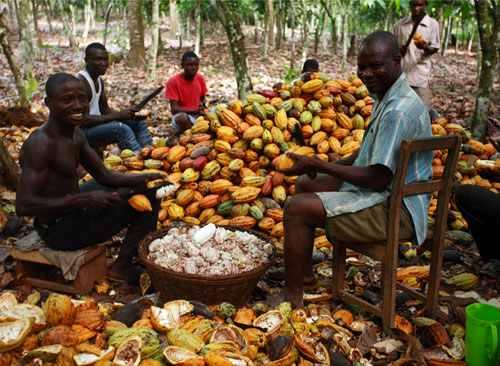 Cocoa-farmers.jpg