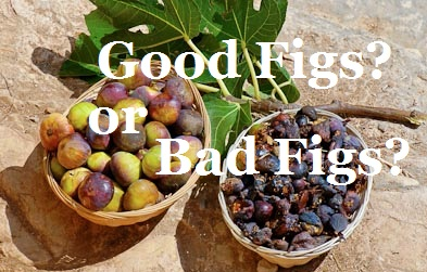 baskets-of-good-and-bad-figs-jeremiah-24-tb092506048-bibleplaces