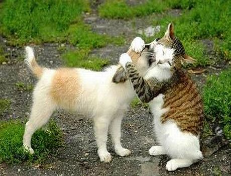 cat_loves_dog_Funny_cats_and_dogs_pics-s460x350-49224-580