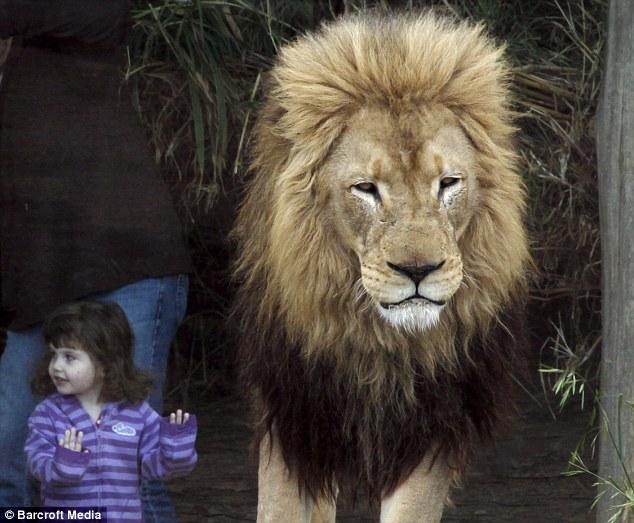 lioncage3 (1)