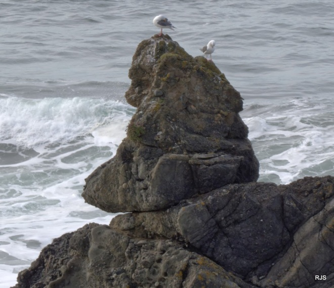 Waiting-for-Rain-Gorilla-Rock-with-two-Gulls-by-Robert-Scarola.jpg
