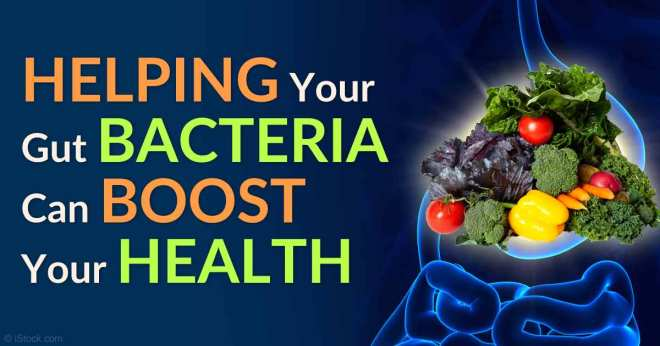 gut-bacteria-boost-health-fb.jpg