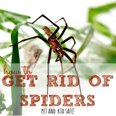 How-to-get-rid-of-spiders-in-your-home-from-HousewifeHowTos