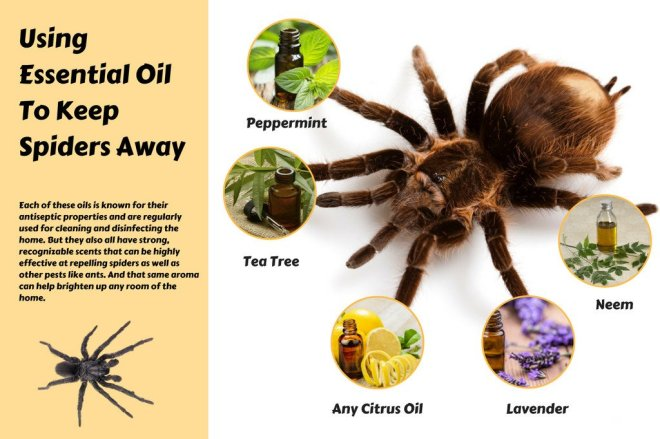 Using-Essential-Oil-To-Keep-Spiders-Away-by-Organic-Aromas
