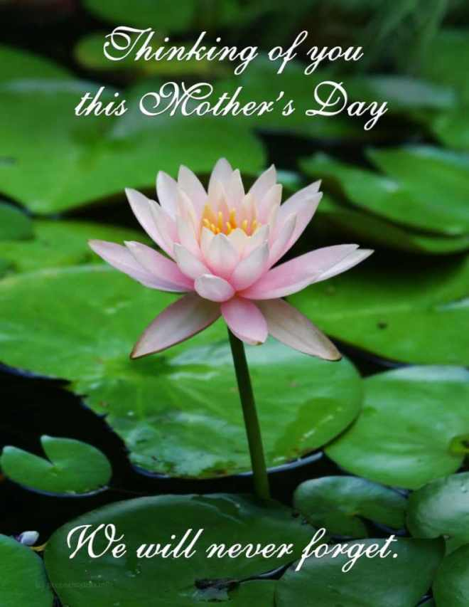 Mothers-Day-Flower-792x1024